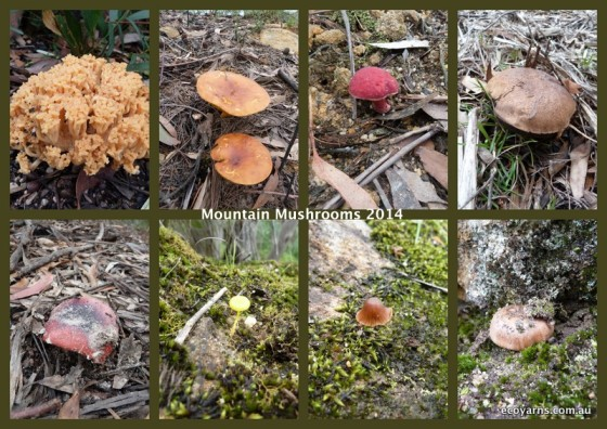 Mountain Mushrooms